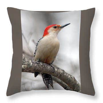 Male Red-bellied Woodpecker Throw Pillow by Diane Giurco