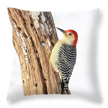 Throw Pillow featuring the photograph Male Red-bellied Woodpecker by Paul Miller