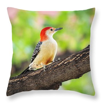 Male Red-bellied Woodpecker Throw Pillow