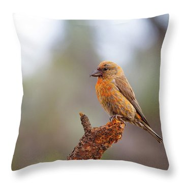Male Red Crossbill Throw Pillow