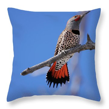 Male Red Shafted Northern Flicker Throw Pillow