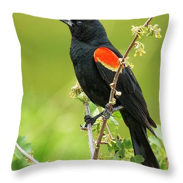 Male Red-winged Blackbird Throw Pillow