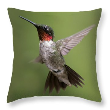 Male Ruby Throated Hummingbird Throw Pillow