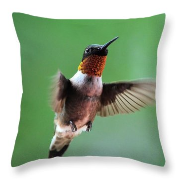 Male Ruby-throated Hummingbird Throw Pillow