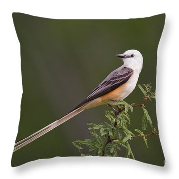 Male Scissor-tail Flycatcher Tyrannus Forficatus Wild Texas Throw Pillow