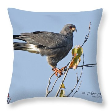 Male Snail Kite Poses Throw Pillow