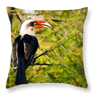Male Von Der Decken's Hornbill Throw Pillow