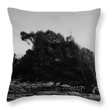 Throw Pillow featuring the photograph Malformed Treeline by Clayton Bruster