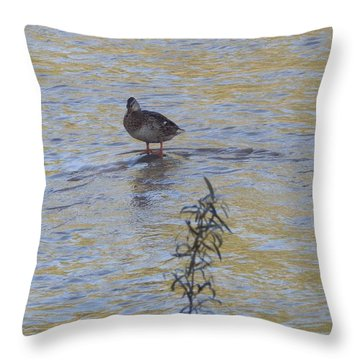 Mallard And The Branch Throw Pillow