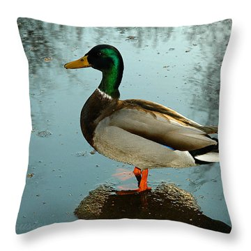 Mallard Throw Pillow by Clayton Bruster