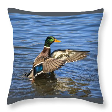 Mallard Drake In The Water Throw Pillow