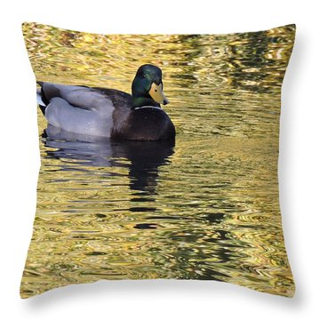 Mallard Drake On Gold Throw Pillow