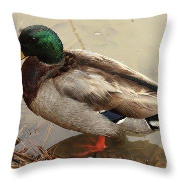 Throw Pillow featuring the photograph Mallard Duck by Kim Henderson