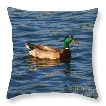 Mallard Drake Duck Swimming Throw Pillow