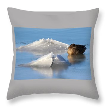 Mallard Duck Mount Sinai New York Throw Pillow