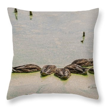 Throw Pillow featuring the photograph Mallard Fine Dining by Edward Peterson