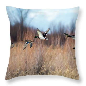 Mallard Flight Throw Pillow