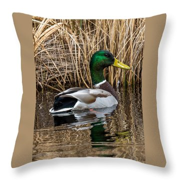 Mallard II Throw Pillow