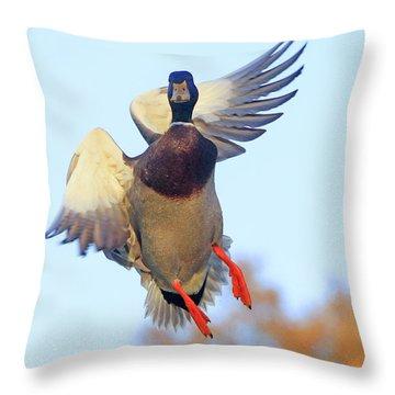 Mallard In Flight 2 Throw Pillow