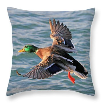 Mallard In Flight 3 Throw Pillow