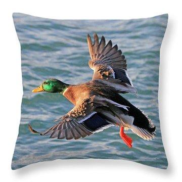 Mallard In Flight 3 Throw Pillow