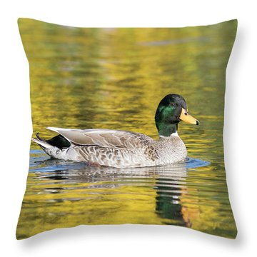 Throw Pillow featuring the photograph Mallard In Yellow by Karen Van Der Zijden