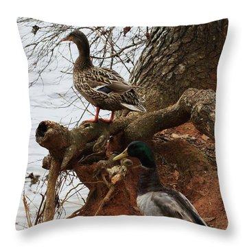 Throw Pillow featuring the photograph Mallard by Kim Henderson