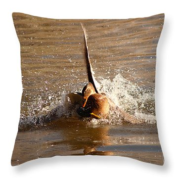 Throw Pillow featuring the photograph Mallard Mating Dance by Max Allen