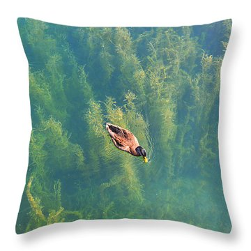 Throw Pillow featuring the photograph Mallard Over Seaweed by SimplyCMB