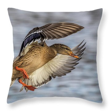 Mallard With Cupped Wings Throw Pillow by Paul Freidlund