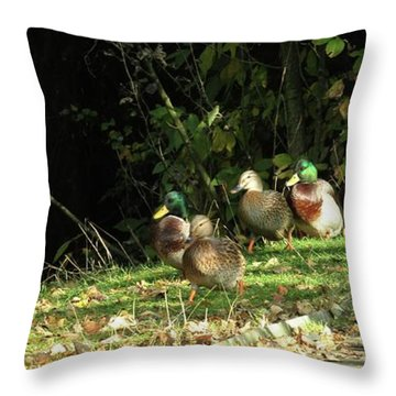 Mallards Walk Throw Pillow by Kim Tran