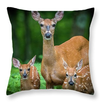 Mama And Fawns Throw Pillow