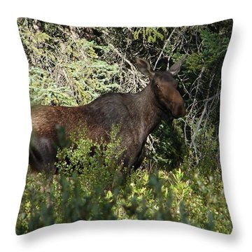 Mama Moose Throw Pillow by Bruce W Krucke