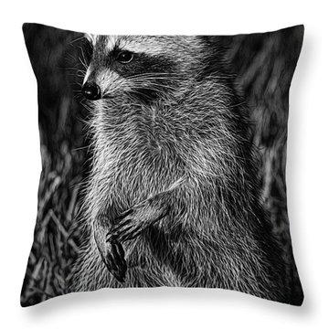 Mama Raccoon Throw Pillow