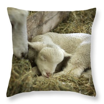 Mama's Lil Lamb Throw Pillow by Linda Mishler