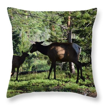 Elk Calf - Mother Rmnp Co Throw Pillow