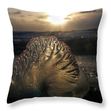 Man-o-war Sunrise II Throw Pillow by Kimberly Mohlenhoff