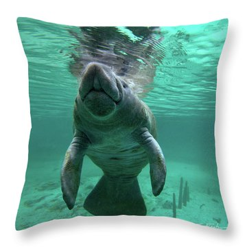 Manatee Breathing Throw Pillow by Tim Fitzharris