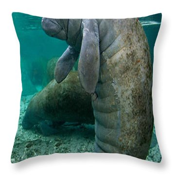 Manatee In Crystal River Florida Throw Pillow