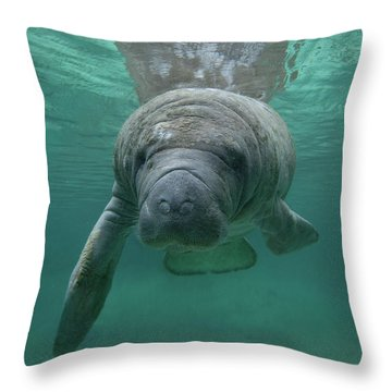 Manatee Throw Pillow by Tim Fitzharris