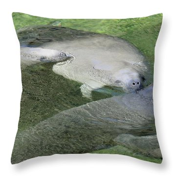 Throw Pillow featuring the photograph Manatees At Blue Springs by Bradford Martin