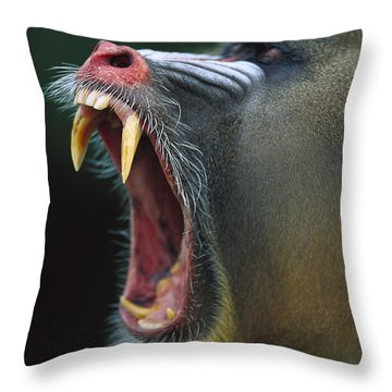 Mandrill Mandrillus Sphinx Adult Male Throw Pillow