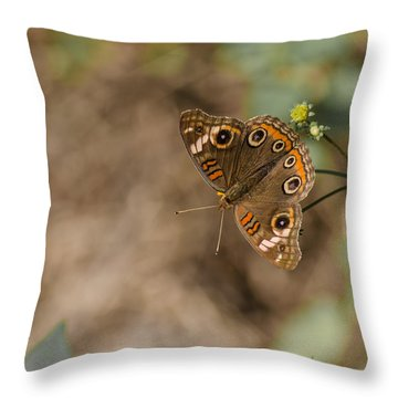 Mangrove Buckeye Butterfly Throw Pillow