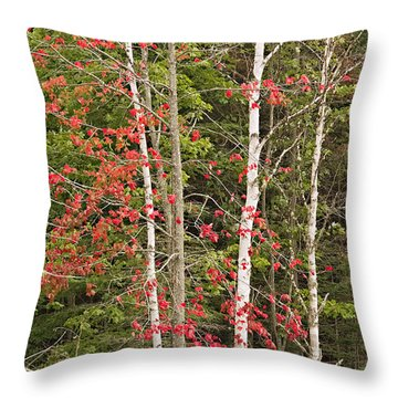 Maple Birch Throw Pillow by Peter J Sucy