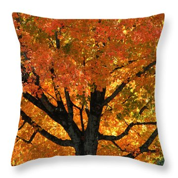 Maple Hill Maple In Autumn Throw Pillow