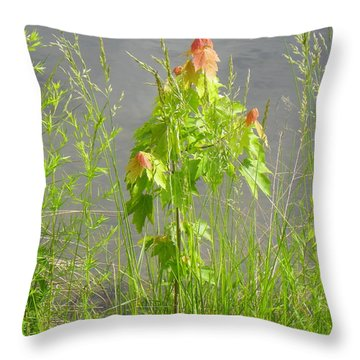 Maple On Lake Throw Pillow by Craig Walters
