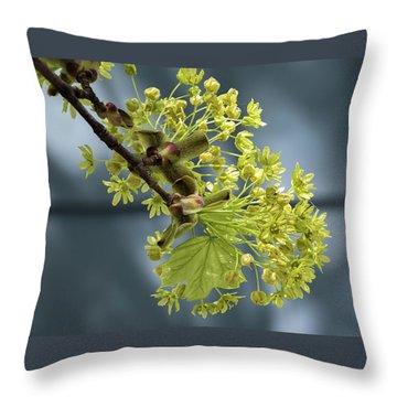 Maple Tree Flowers 2 - Throw Pillow