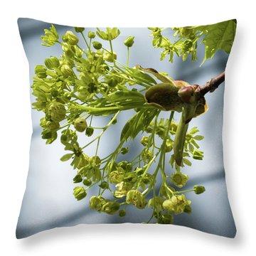 Maple Tree Flowers - Throw Pillow