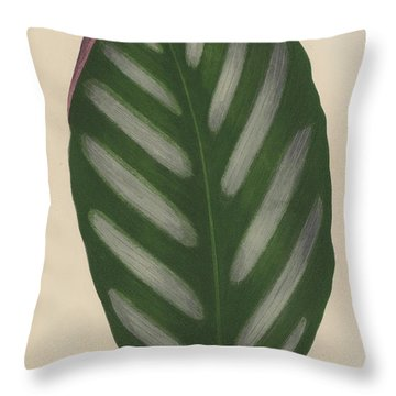 Maranta Porteana Throw Pillow by English School