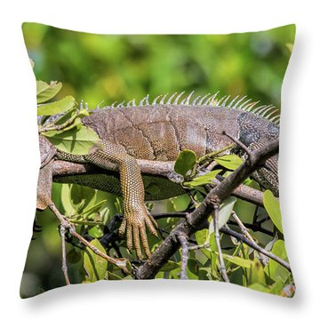 Marathon Lizzard Throw Pillow
